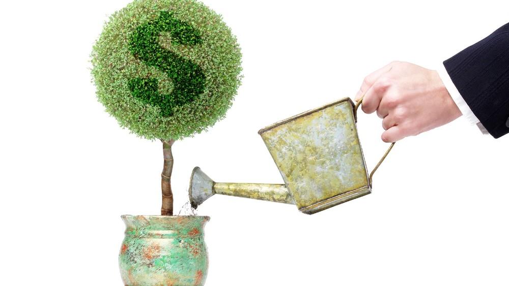 Поливать денежное дерево